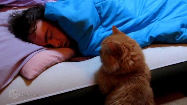 تعبیر دیدن گربه در خواب
